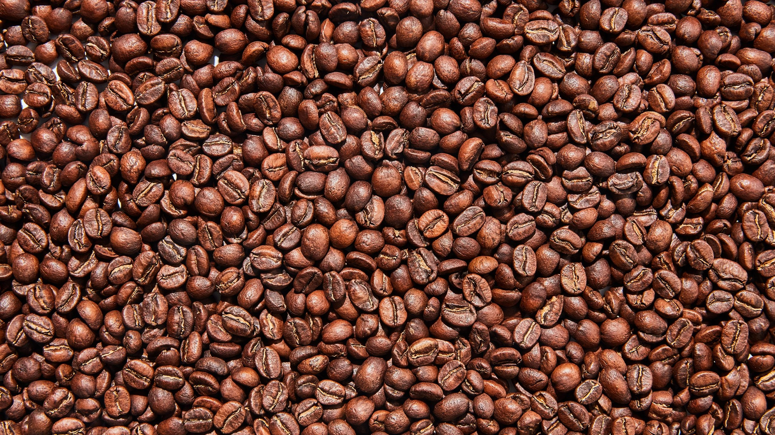 best coffee bean for cold brew